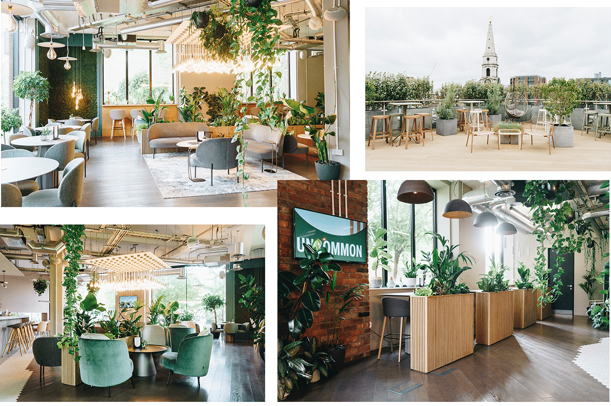 4 overlapping images of Uncommon office in London; a light, airy, natural-feeling office with plants and wooden decor